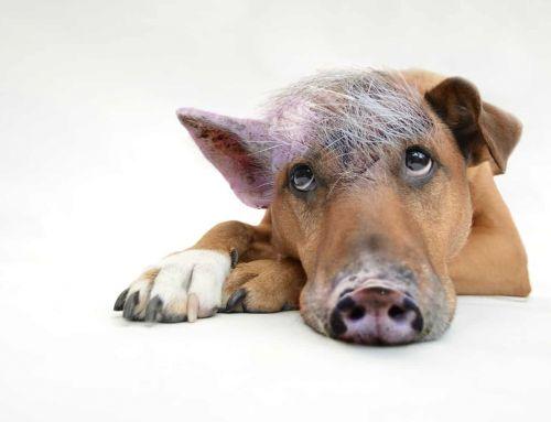 Der Schweinehund als Trainingspartner
